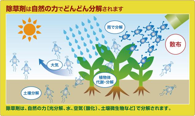 安全 除草 剤